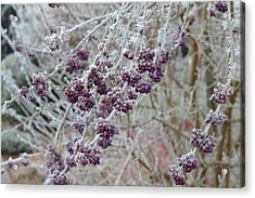 Acrylic Print featuring the photograph Winter In Lila by Felicia Tica