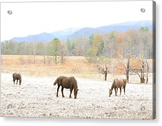 Winter In The Cove Acrylic Print by Gene Smith