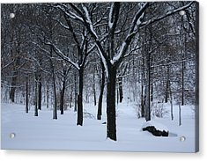 Acrylic Print featuring the photograph Winter In The Park by Dora Sofia Caputo Photographic Art and Design