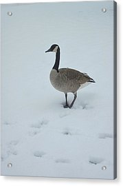 Winter In Their Cry Acrylic Print by Guy Ricketts