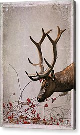 Winter King Acrylic Print by Julie Magers Soulen