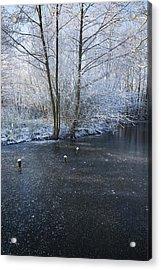 Winter Lake Acrylic Print by Svetlana Sewell