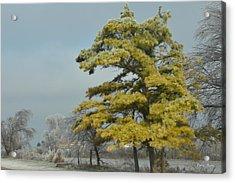 Acrylic Print featuring the photograph Winter Landscape by Debra Martz