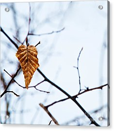 Acrylic Print featuring the photograph Winter Leaf by Kennerth and Birgitta Kullman