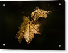 Winter Leaves Acrylic Print by Ron Roberts
