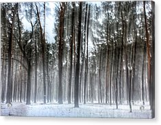 Winter Light In A Forest With Dancing Trees Acrylic Print