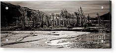 Acrylic Print featuring the photograph Winter Light by J L Woody Wooden
