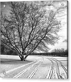 Winter Lines Acrylic Print by Lauri Novak