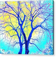 Winter Marriage Of Two Trees Acrylic Print by Ann Johndro-Collins