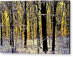 Winter Mood Lighting Acrylic Print by Frozen in Time Fine Art Photography