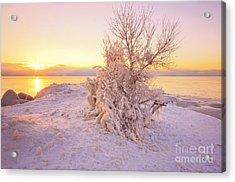 Winter Sunrise Acrylic Print by Charline Xia