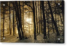 Winter Morning Acrylic Print by Norbert Maier