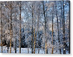 Winter Nature Ans Scenery Acrylic Print