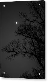 Winter Night Acrylic Print