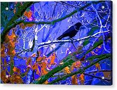Winter Night Roost Acrylic Print