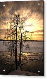 Winter Night3 Acrylic Print