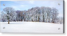 Winter Oak Acrylic Print by David Birchall