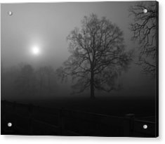 Winter Oak In Fog Acrylic Print