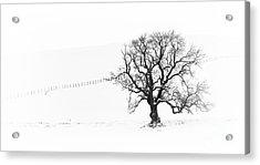 Winter Oak Tree Acrylic Print by Tim Gainey