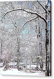 Winter On A Spring Day Acrylic Print by Pamela Hyde Wilson