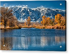 Winter Or Fall Acrylic Print by Cat Connor