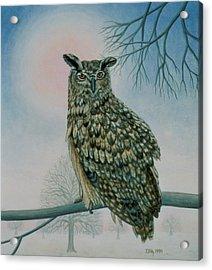 Winter Owl Acrylic Print by Ditz