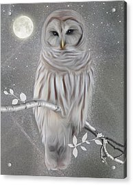 Winter Owl Acrylic Print