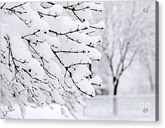 Winter Park Under Heavy Snow Acrylic Print by Elena Elisseeva
