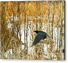 Winter Passage Acrylic Print by Judy Wood