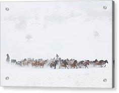 Winter Pastures Acrylic Print