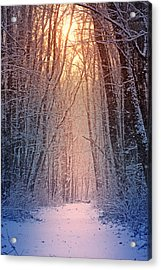 Winter Pathway Acrylic Print by Rob Blair