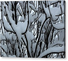 Winter Pattern 1 Acrylic Print by Debbie Finley