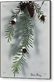 Winter Pine Cones Acrylic Print by Patricia Pasbrig