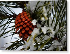 Acrylic Print featuring the photograph Winter Pine by Guy Hoffman