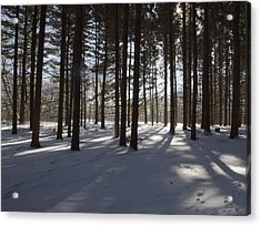 Winter Pines Acrylic Print by Daniel Sheldon