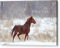Winter Proud Acrylic Print by Mike  Dawson