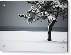 Winter Quiet Acrylic Print by Karol Livote