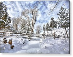 Winter Radiance Acrylic Print