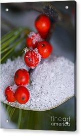 Winter Red Berries Acrylic Print by Birgit Tyrrell
