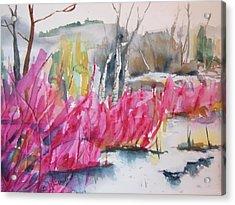 Winter Redtwig Dogwoods Acrylic Print