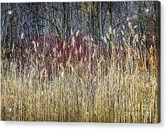 Winter Reeds And Forest Acrylic Print