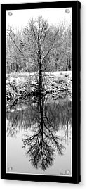 Winter Reflections 3 Acrylic Print by David Lester