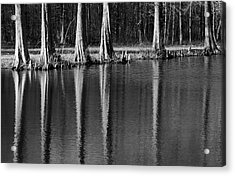 Winter Reflections - Cypress Tree Art Print Acrylic Print
