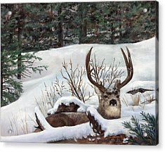 Winter Rest Acrylic Print