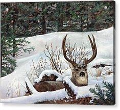 Winter Rest Acrylic Print by Karen Cade