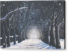 Winter Road Acrylic Print by Carrie Ann Grippo-Pike