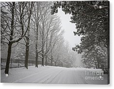 Winter Road Acrylic Print by Elena Elisseeva