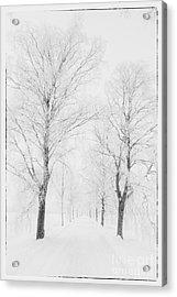Winter Road Acrylic Print by Veikko Suikkanen