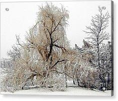 Winter Scene Acrylic Print by Kathleen Struckle