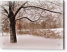 Winter Scene Acrylic Print by Marty Koch
